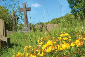 Cemetaery wildflowers REGB WEB K4-6-15