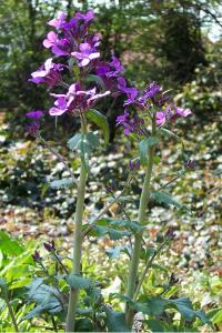 wild flower WEB